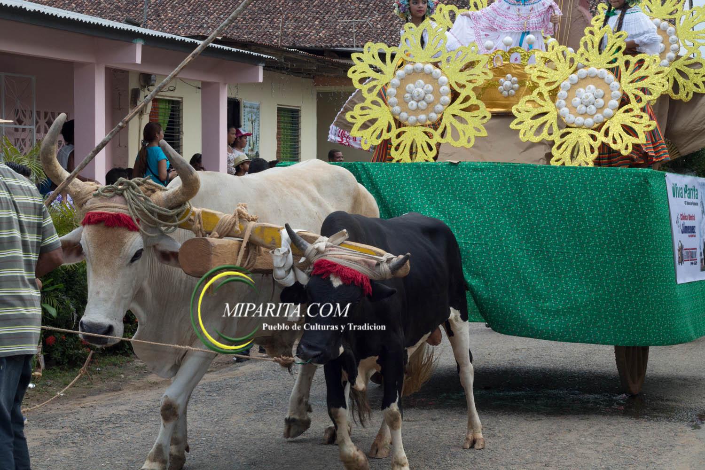 Desfile de carreta 2015-63